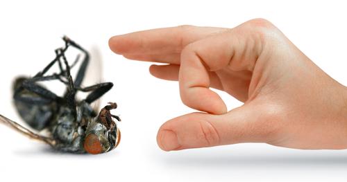 احدث اساليب مكافحة الحشرات بالرياض