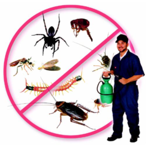 طرق رش المبيدات بالرياض