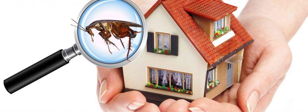 مكافحة حشرات منفوحة بالرياض