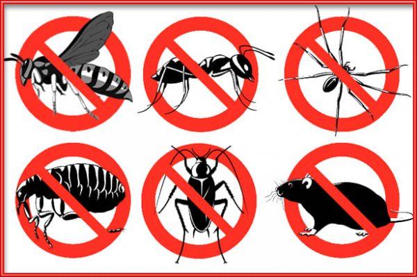 مكافحة حشرات الحمراء بالرياض