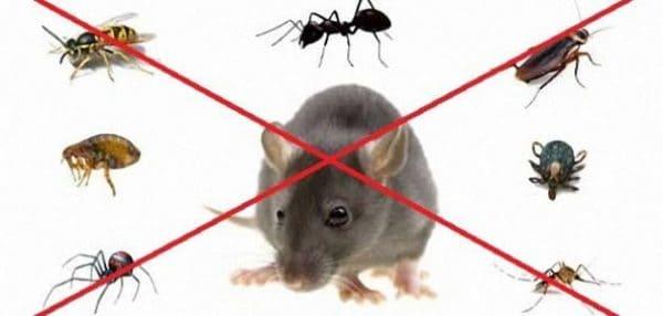 مكافحة حشرات قرطبه بالرياض